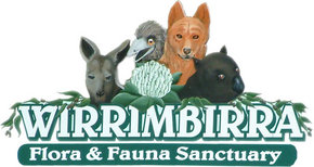 Wirrimbirra Sanctuary - Accommodation NSW