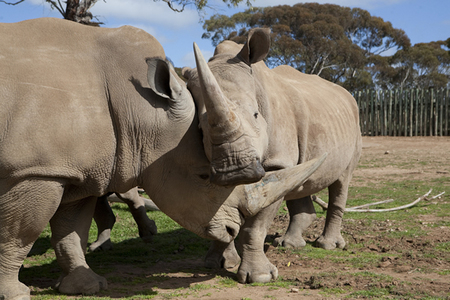 Monarto Zoo - Accommodation NSW