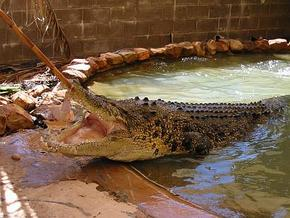 Wyndham Zoological Gardens and Crocodile Park - Accommodation NSW