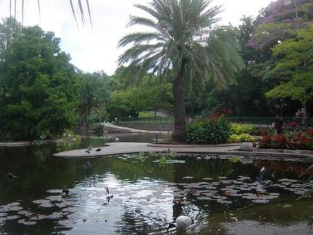 Brisbane City Botanic Gardens - Accommodation NSW