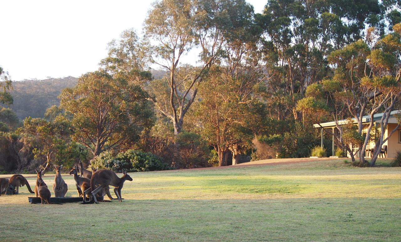 Riverside Retreat Chalets Walpole - Accommodation NSW